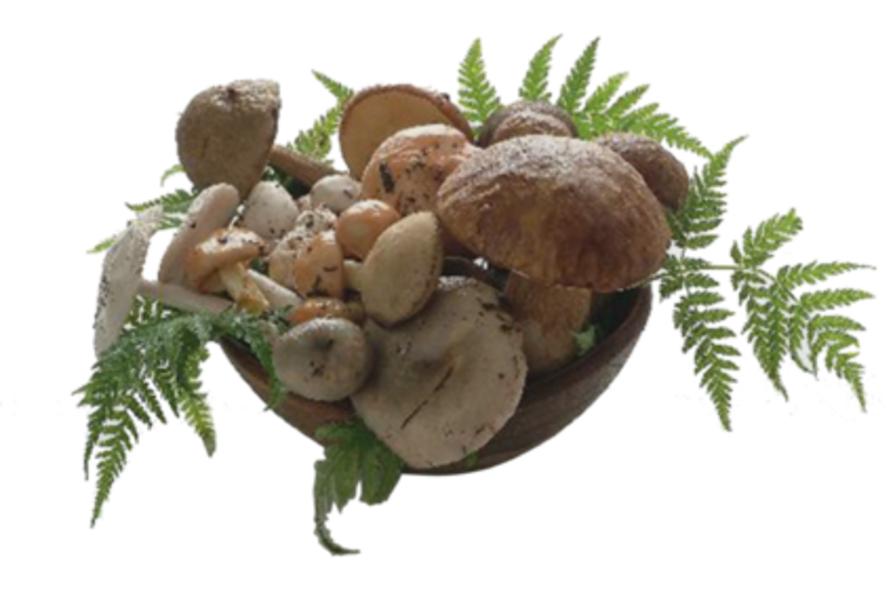 Ortopat corte d 39 asolo specialit sott 39 olio sughi e for Prodotti da cucina